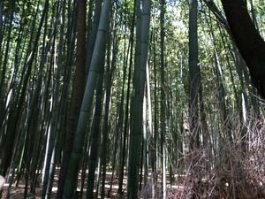 嵐山の竹林の小径2