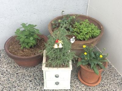ハーブ、秋、コットンラベンダー、カレンデュラ、オレガノ