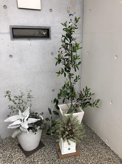 名古屋市 ガレージ garagi グリーン 植物 寄植え ガーデニング