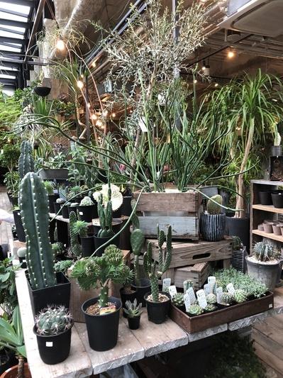 名古屋市 ガレージ garagi グリーン 植物 寄植え ガーデニング ジャンク