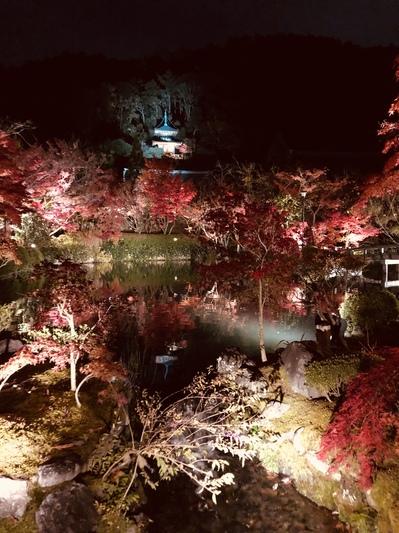 永観堂禅林寺 京都 紅葉 ライトアップ